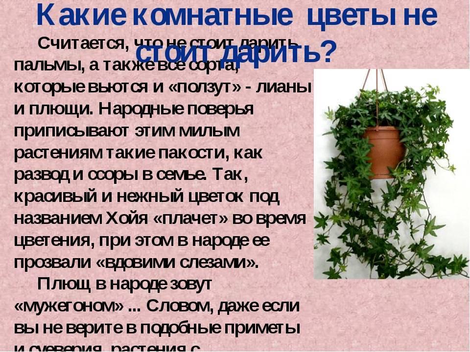 Предметы «убийцы счастья», которые нельзя хранить дома, иначе можно привлечь проблемы и беды