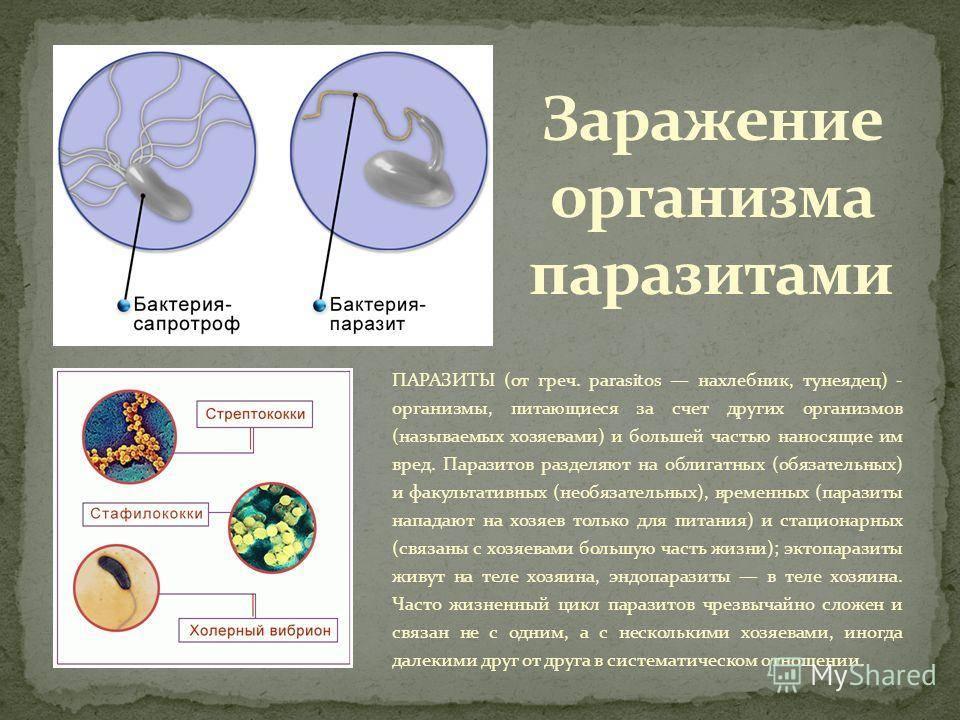"""Печеночный сосальщик: симптомы заражения человека   """"сенситив"""""""