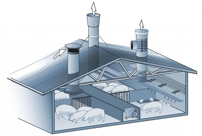Какая нужна вентиляция в свинарнике и как её правильно сделать?