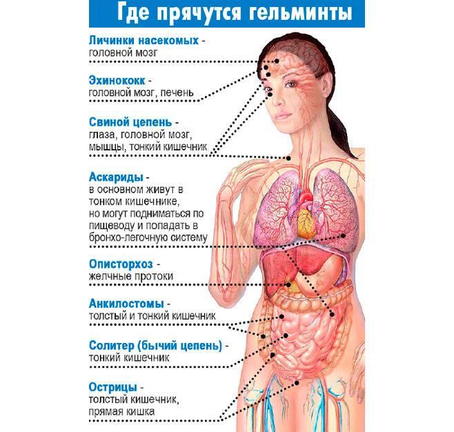 Паразиты: у кого они есть, можно ли заразиться от животных, надо ли глистогониться, как лечиться - форма