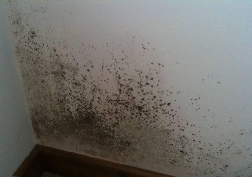 Избавляемся от влажности в доме: выбор материалов и способа