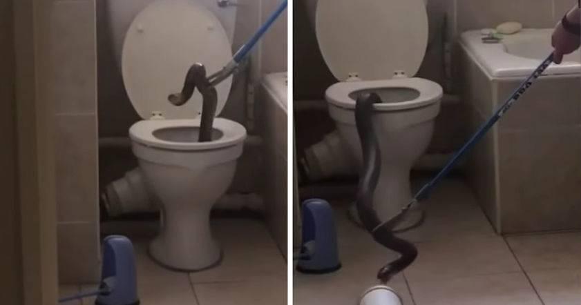 Как незаметно и бесшумно сходить в туалет