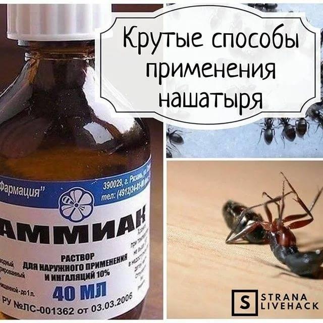 Химические свойства аммиачного раствора - формула, применение в быту, медицине и в садоводстве