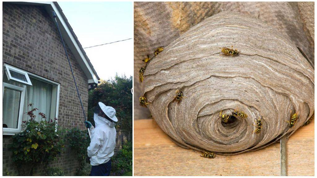 Эффективные способы: как избавиться от осиного гнезда на даче или дома, быстро и без вреда