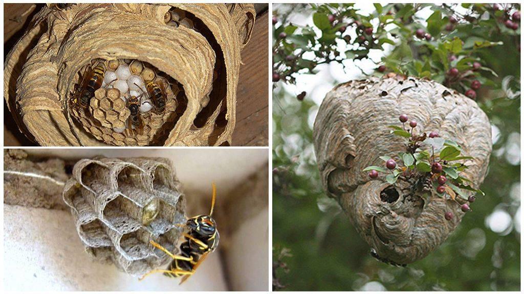 Как безопасно убрать осиное гнездо в доме?