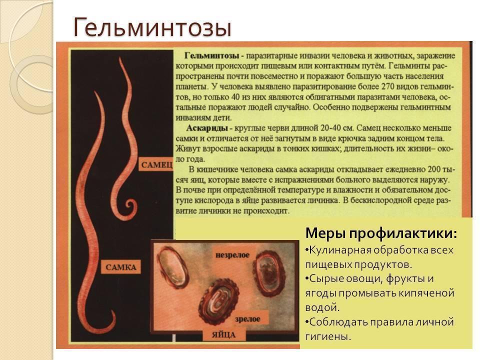 Паразитарные болезни мозга