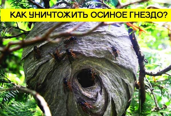 Как убрать осиное гнездо на даче с чердака своими руками