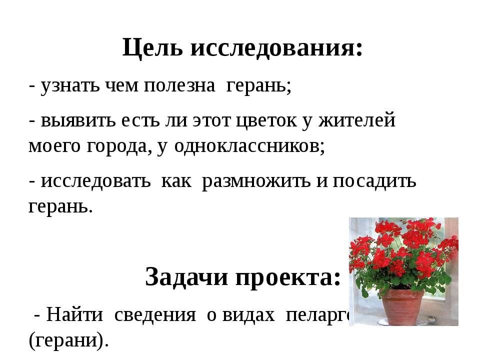 Какие цветы нельзя держать дома: приметы, поверья, энергетика
