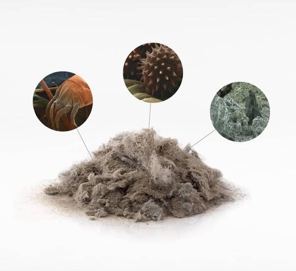 Аллергия на пыль: причины, симптомы, лечение