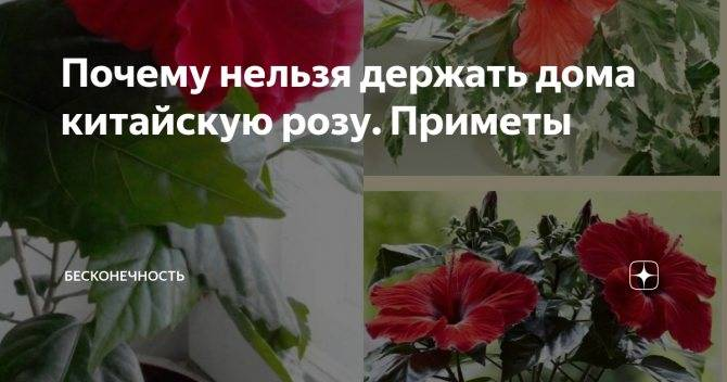 ✅ можно ли в доме держать камыши - усадьбанатали.рф