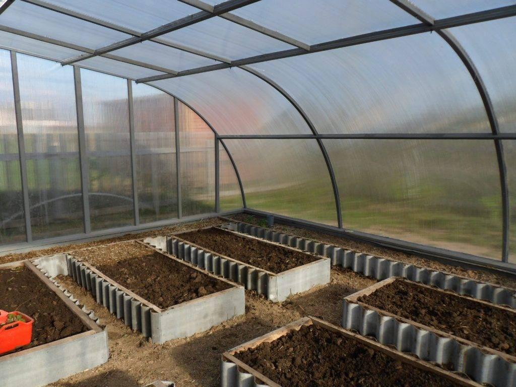 Правильное обустройство теплицы: планировка, организация жизнедеятельности растений