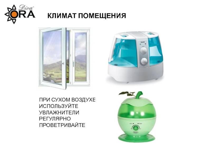 Как пользоваться увлажнителем воздуха: какую влажность выставлять