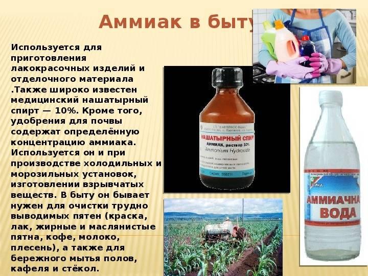 Нашатырный спирт от тараканов - как травить? (рецепт, отзывы)