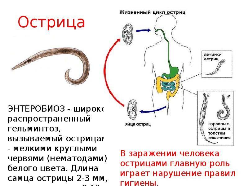 12 верных признаков, что ваше тело отравляют паразиты