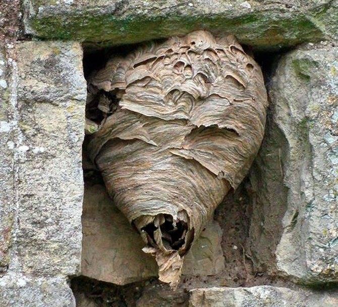 Почему нельзя разрушать осиное гнездо