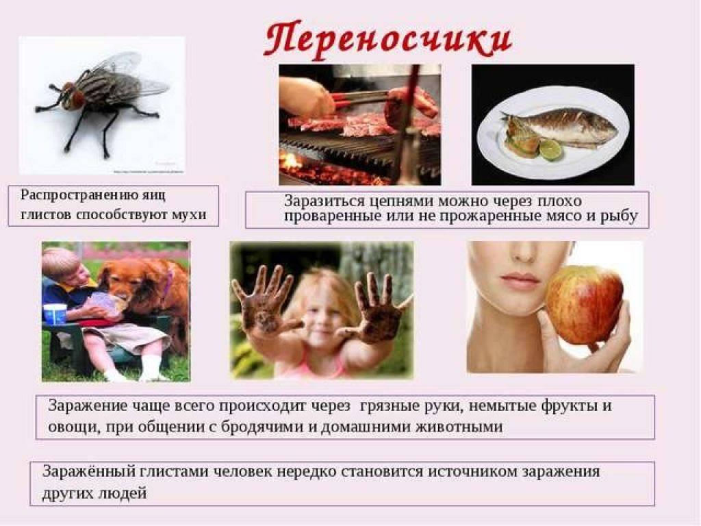 """Острицы во влагалище: лечение, симптомы, профилактика, сдать анализы   гуз """"больница № 18"""""""